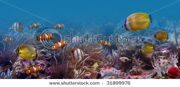 stock-photo-tropical-fishes-31899976