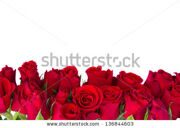 stock-photo-border-of-fresh-red-garden-roses-isolated-on-white-background-136844603