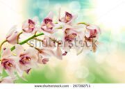 stock-photo-close-up-of-orchid-flower-267392711