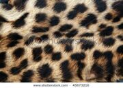 stock-photo-real-leopard-fur-45673216