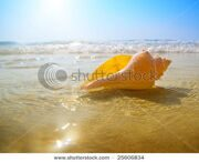 stock-photo-seashell-sand-and-ocean-25606834