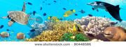 stock-photo-underwater-panorama-with-turtle-coral-reef-and-fishes-80448586