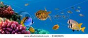 stock-photo-underwater-panorama-with-turtle-coral-reef-and-fishes-sharm-el-sheikh-red-sea-egypt-83287855