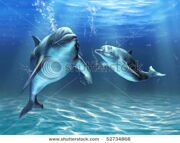 stock-photo-two-dolphins-happily-swimming-in-the-ocean-digital-illustration-52734868