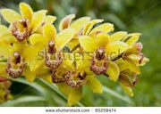 stock-photo-wild-orchids-and-a-garden-85258474