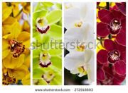 stock-photo-collage-of-floral-backgrounds-orchids-272918693