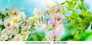 stock-photo-orchid-spring-nature-243671998