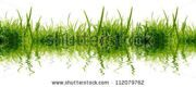 2 stock-photo-green-grass-on-the-white-background-112079762