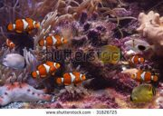 stock-photo-exotic-fishes-31826725