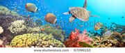stock-photo-underwater-panorama-with-turtle-coral-reef-and-fishes-67096153 (1)
