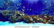 stock-photo-underwater-image-of-reef-and-tropical-fishes-16782406