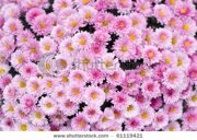 stock-photo-close-up-of-beautiful-pink-flower-background-61119421