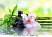 stock-photo-spa-stones-bamboo-branches-and-white-orchid-on-table-on-natural-background-223265779