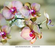 stock-photo-orchid-brench-171015725